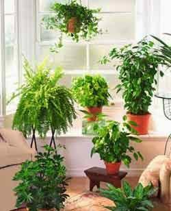 Vacaciones, Cuidado de las Plantas Durante tu Ausencia