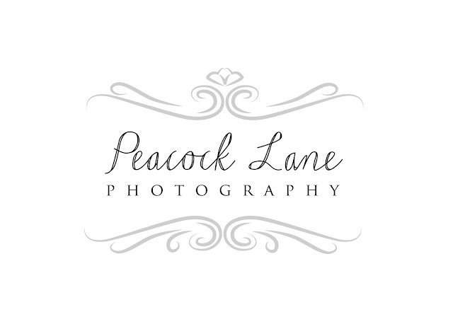 wedding photography logo design adelaide sail and swan