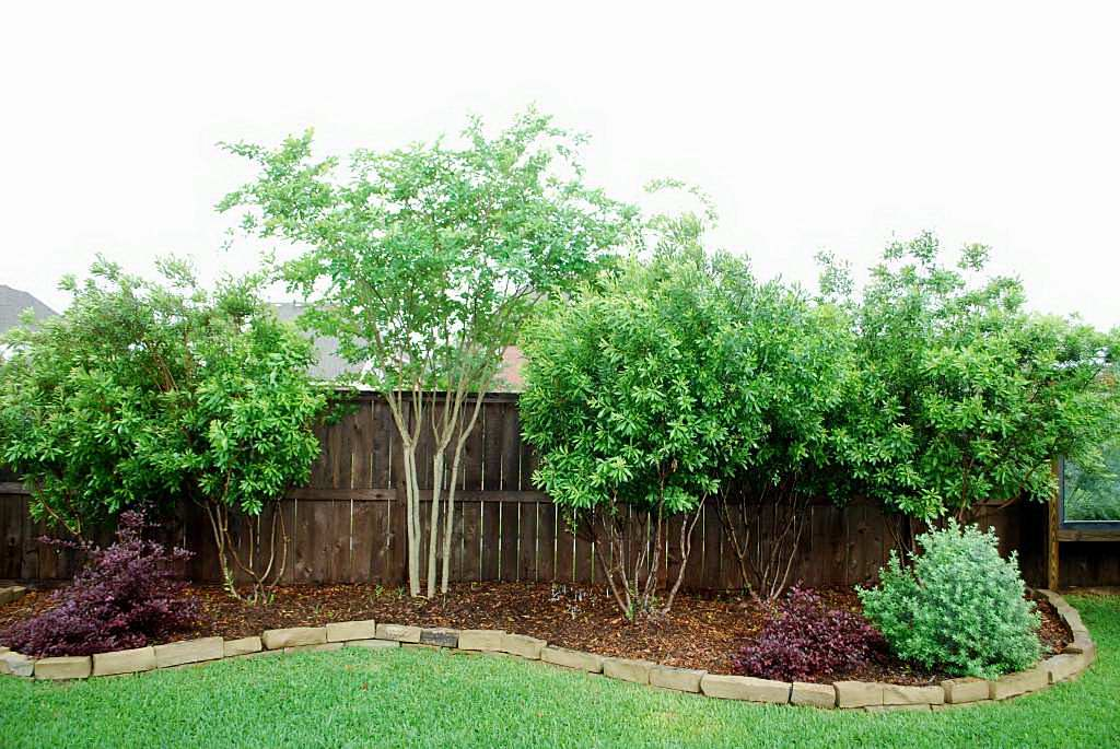 Centerpointe communicator landscaping made easy part 5 for Backyard privacy landscaping trees