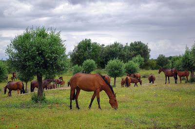 Caballos en las praderas - Horses