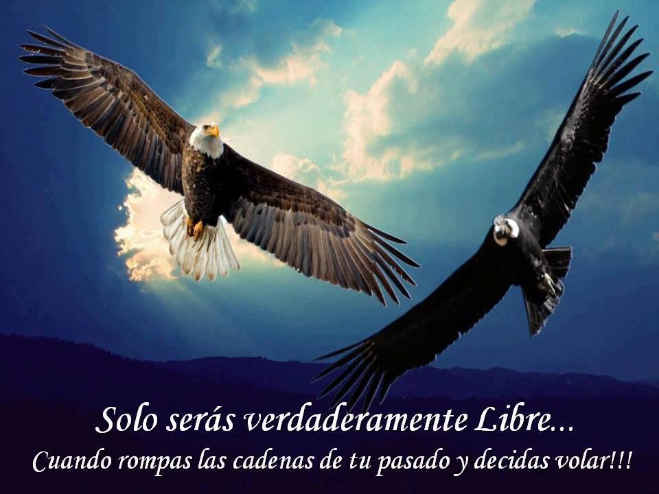 ===Que es para ti volar?...=== - Página 2 Frases-lindas