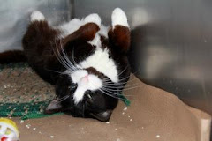 1/13/12 Conway was at NYC Animal Ctr Scheduled to be killed.  It is my understanding he was rescued