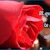 Foto hermosa rosa con frase para biografías de facebook