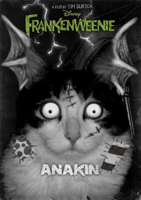 Frankenweenie-fyed Anakin the two legged cat