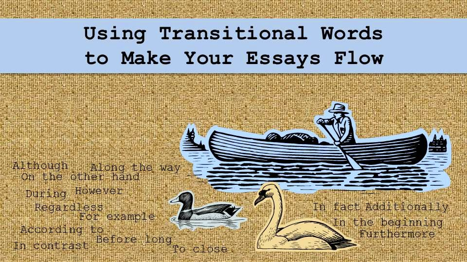 A man in a canoe, a swan, and a duck all float peacefully in water of transitional words.