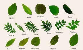 Canlıların benzerlik ve farklılıklarına göre gruplara ayrılarak