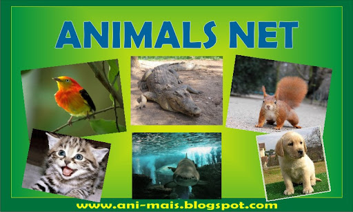 Animals Net