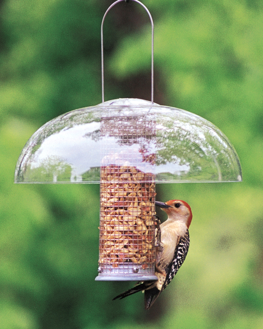 view meet wild east neighbors bird amherst ny birds feeders feeder your places unlimited