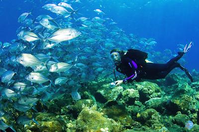 Dasar Laut Tulamben Bali