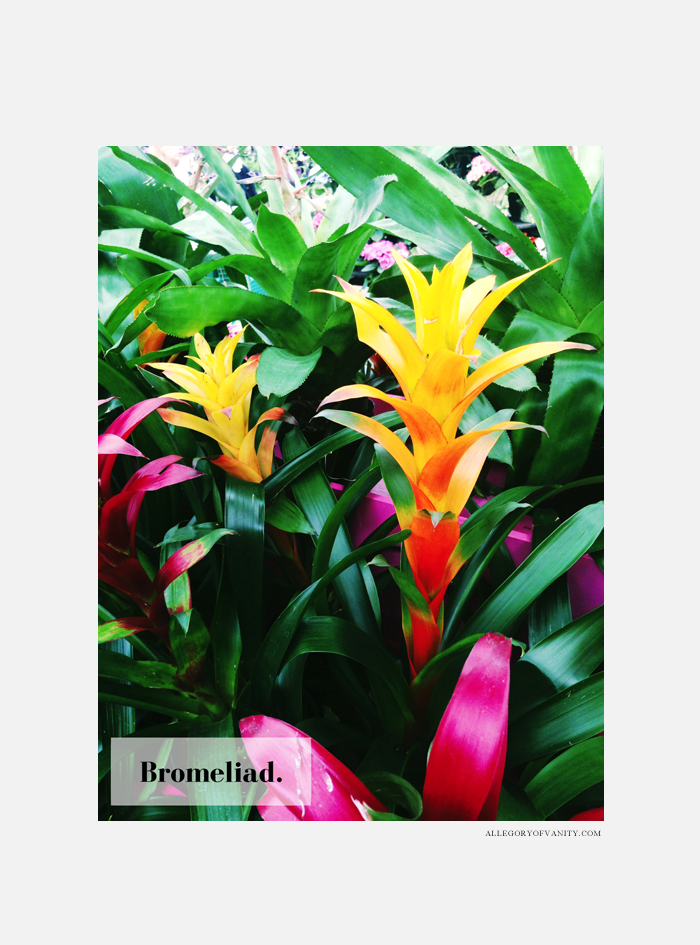 Spring Flower Show | Bromeliad | Allegory of Vanity