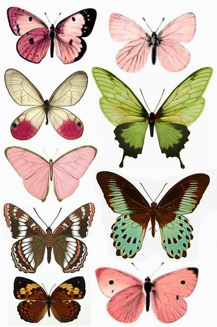 Imprimolandia mariposas para imprimir - Papillon imprimer ...