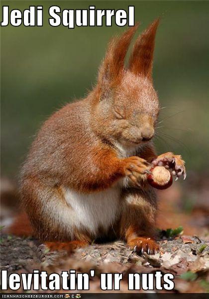 Funny Pictures Jedi Squirrel Levitatin Ur Nuts
