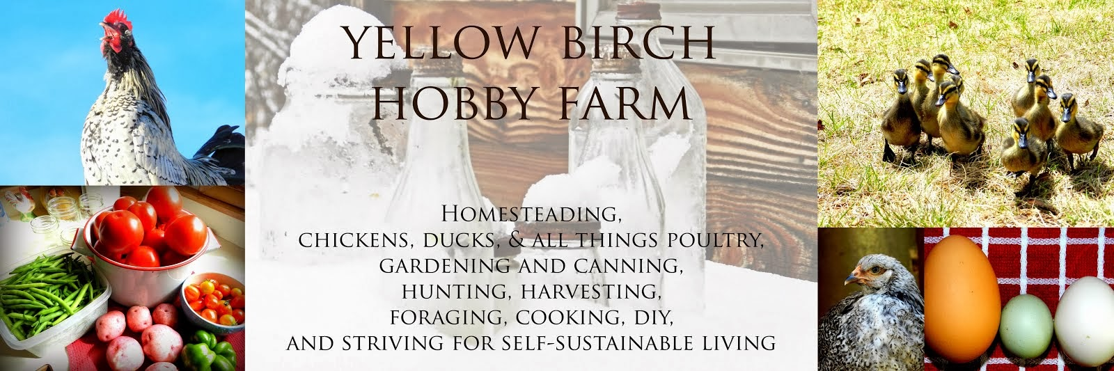 Yellow Birch Hobby Farm