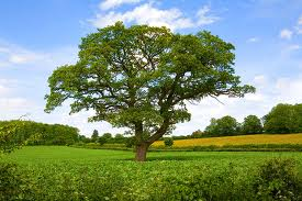 newarticlesz essay on trees they are a precious gift given by mother nature to man in the hope that man will look after them and live in harmony
