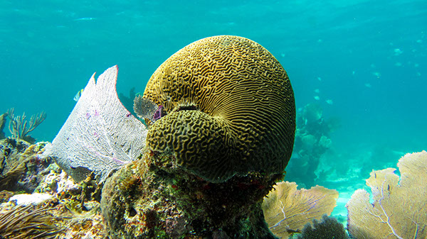 Projeto Coral Reef mostra as belezas da vida subaquática de Yucatan