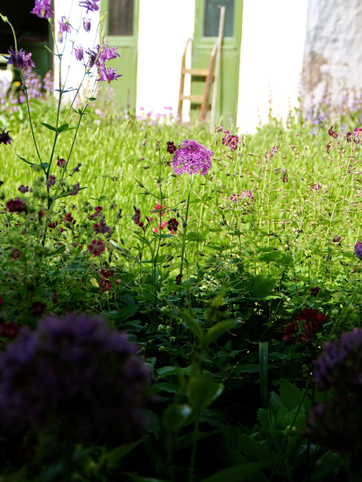 En grön sida: en trädgård i staden