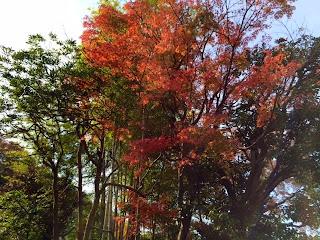 鎌倉の報国寺