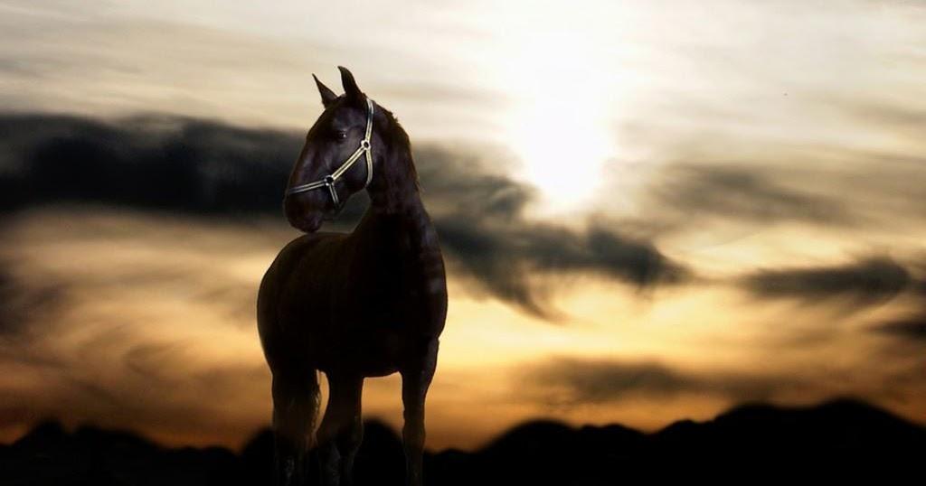 wallpaper of horses