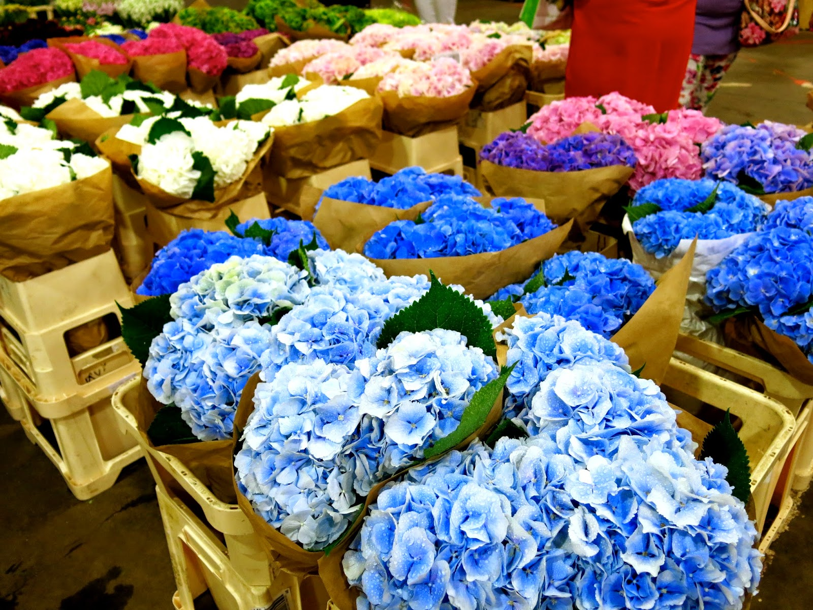 One Of My Favourite Flowers Is The Hydrangea It So Fluffy Huge And Totally Reminds Me Cotton Candy Receiving A Pot Can Really Brighten
