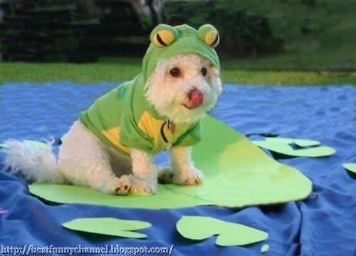 Dog frog.