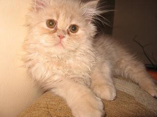 (49) Choroba - wytłumaczenie + zdjęcia kotek