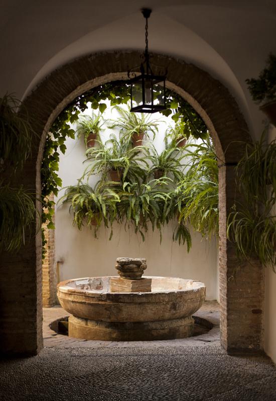 La flora de los patios de c rdoba for Patios con plantas