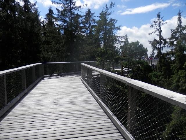 Stezka korunami stromů // Treetop Walkway
