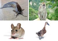 kelompok hewan pemakan segala, baik tumbuhan maupun hewan lain