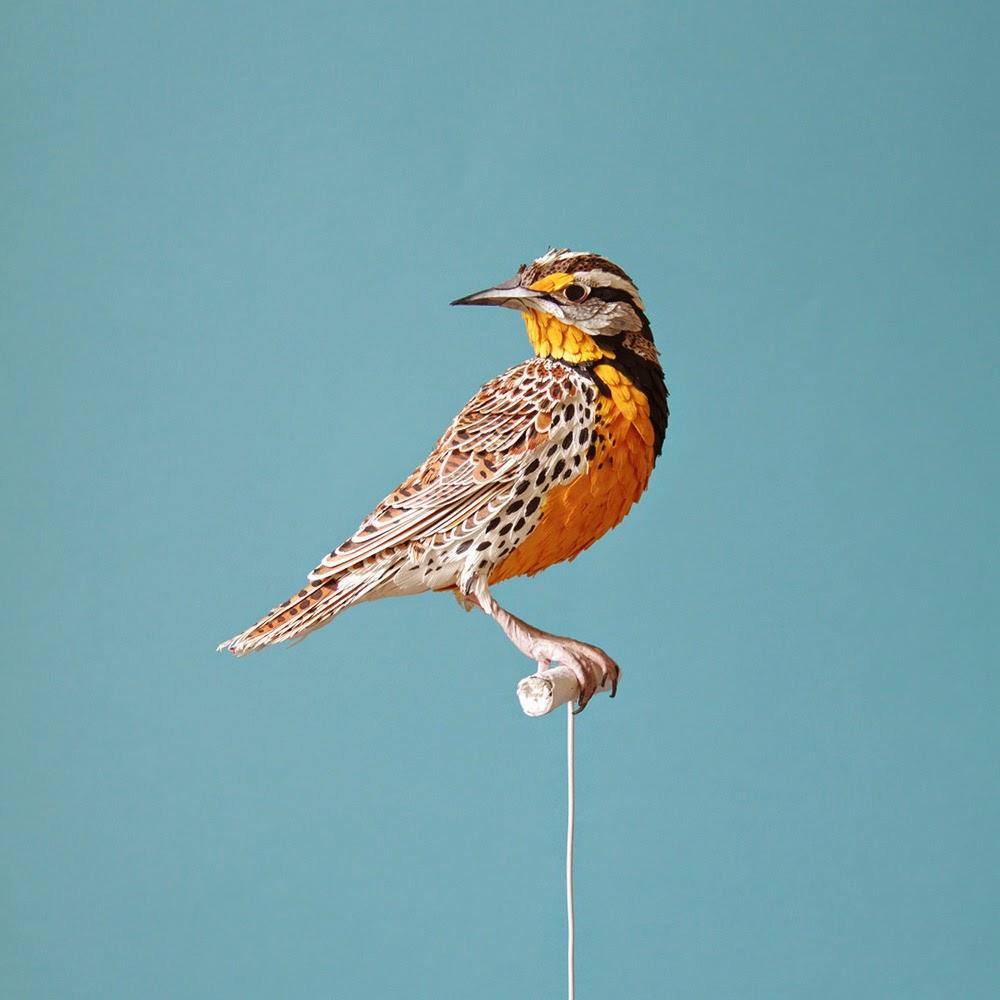 Simply Creative: New Lifelike Paper Birds by Diana Beltran Herrera
