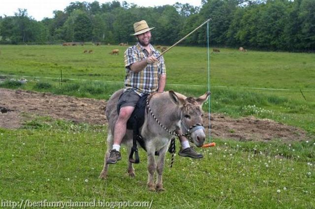 Funny donkey.