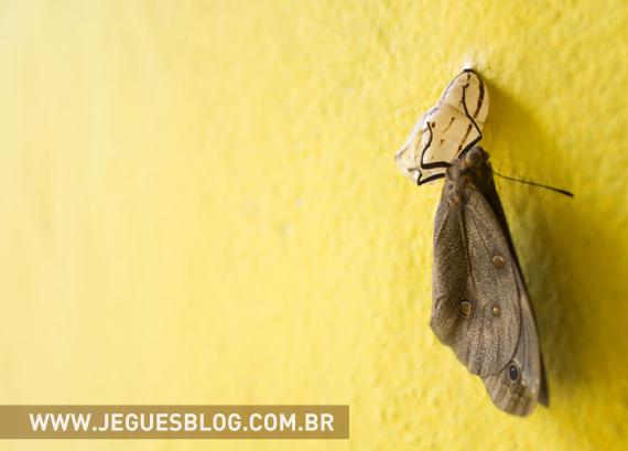 Borboleta saindo do casulo © Fotografia por Jéssica Guedes
