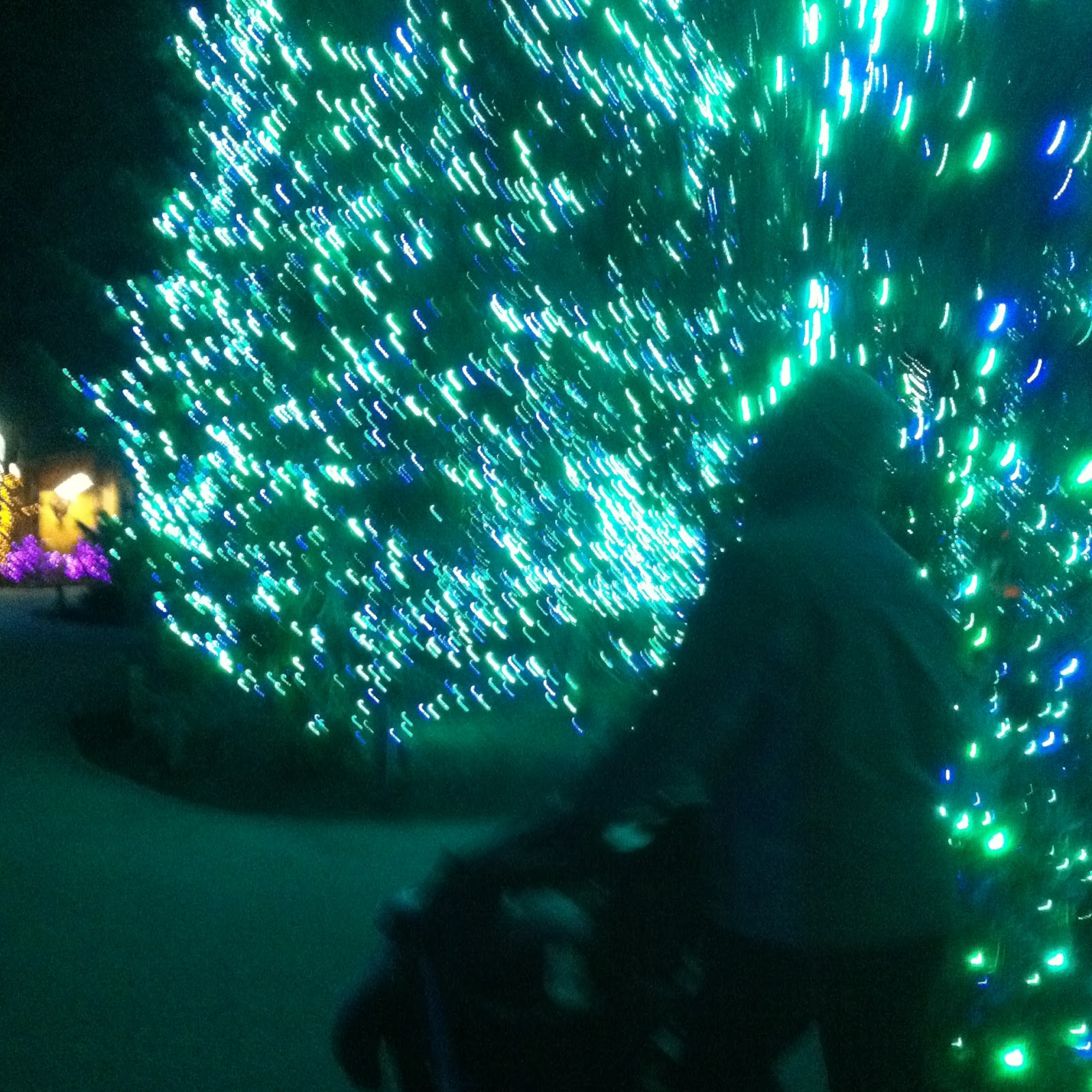 but doesnt the blurriness make jesse look like hes pushing the stroller into a hyperspace jump up there also can you tell we just saw star wars and - Toledo Zoo Christmas Lights