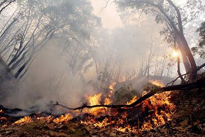 Cálculo del riesgo potencial de incendios