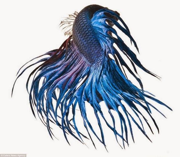 color-fish-3