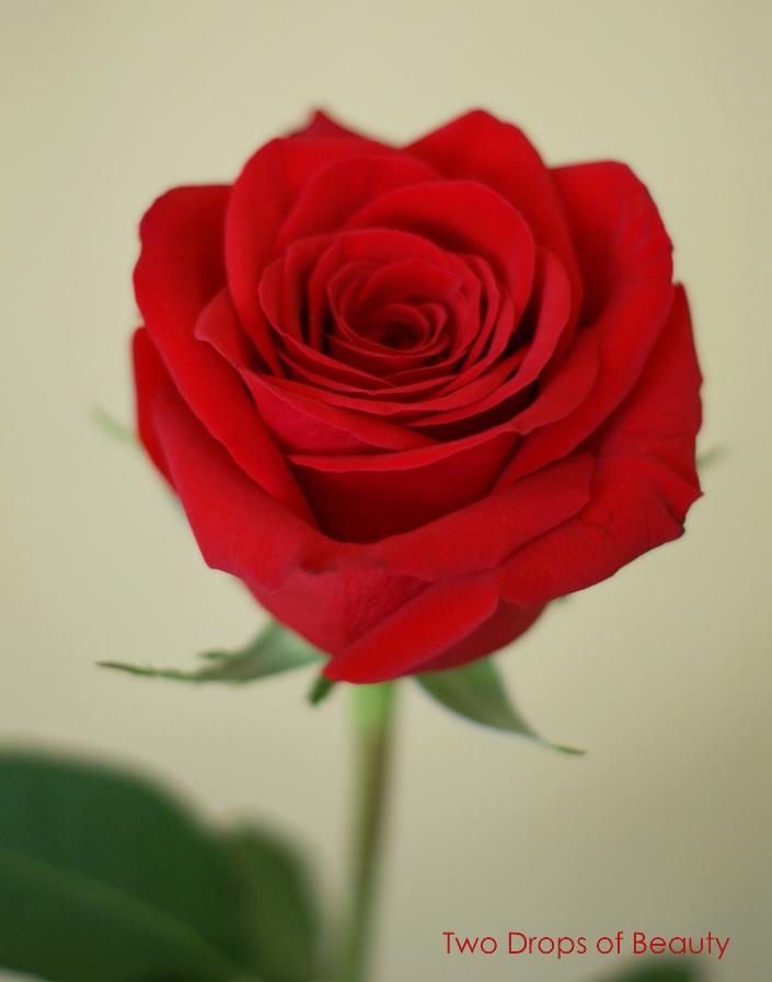 благодарность читателям, red rose