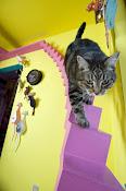 Estruturas para Gatos