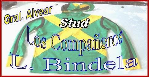 Bindela