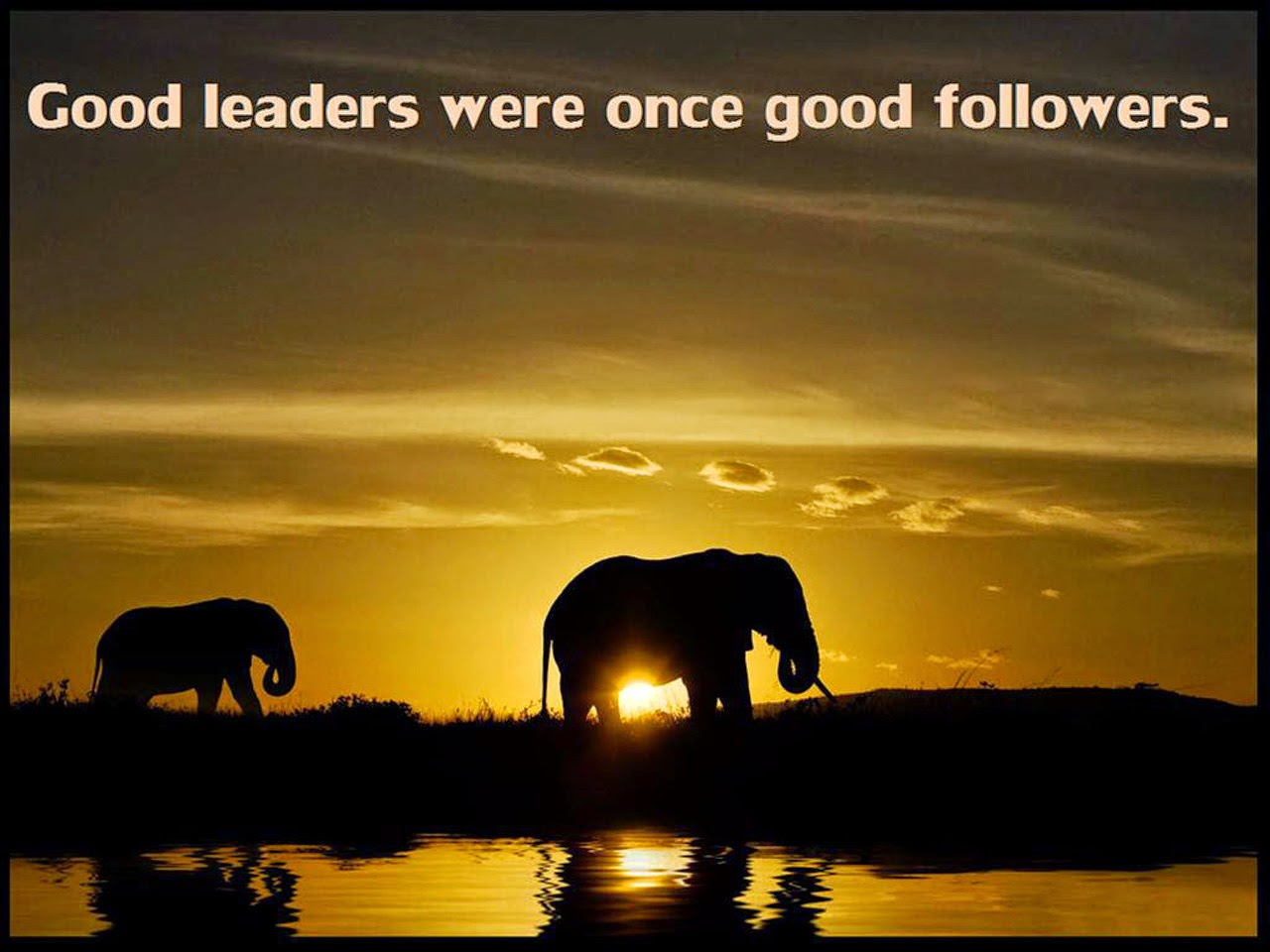 Good Leadership Quotes Good Leadership Quotes Delectable Best 25 Leadership Quotes Ideas