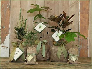 Bodas Ecologicas, Ideas para Matrimonios Eco Friendly