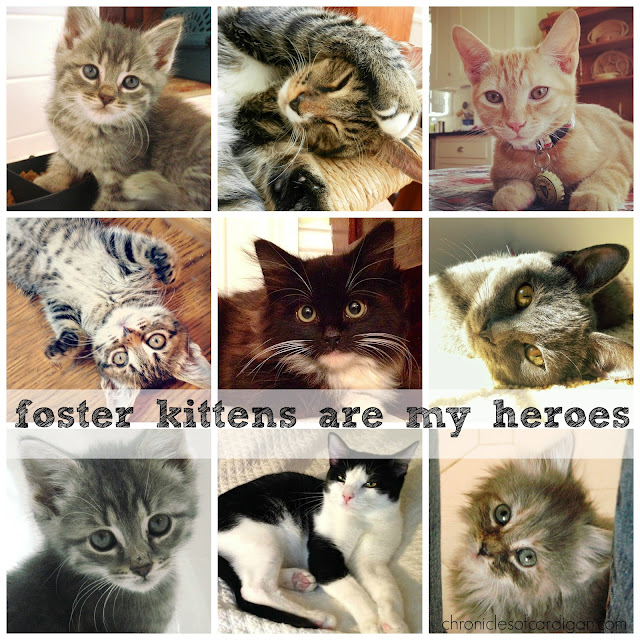 "a collage of adorable kittens with caption ""foster kittens are my heroes"""