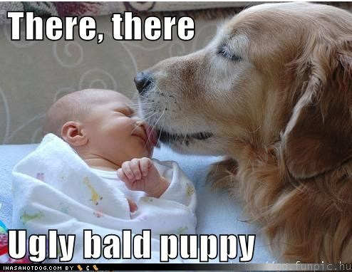 funny-dog-pictures-there-there-ugly-bald