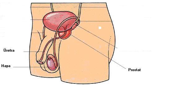 почему у мужчин с возрастом ухудшается сперма-пк1