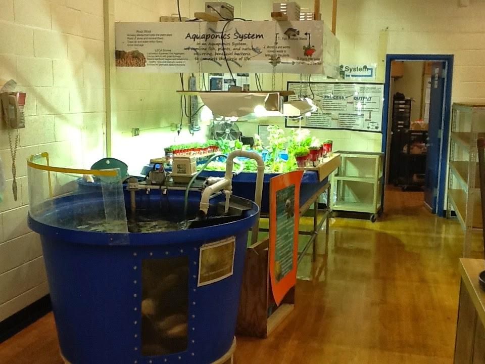 Our Aquaponics System