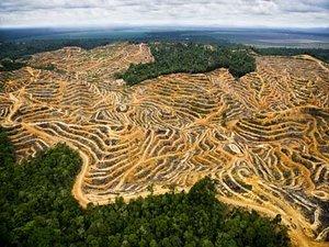 metode-pembukaan-lahan-kelapa-sawit.jpg