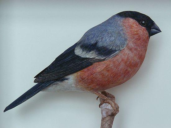 فنان يصنع طيور من الورق واقعية بشكل لا يصدق  Papercraft-birds6%5B1%5D