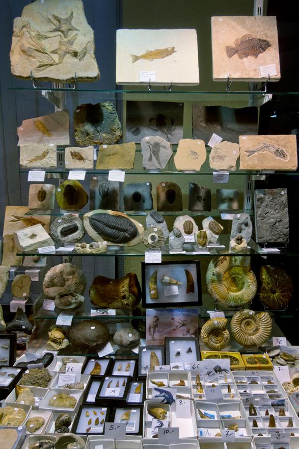 Fósiles en el XXV Certamen de Minerales, Gemas y Fósiles de la Escuela de Minas de Oviedo