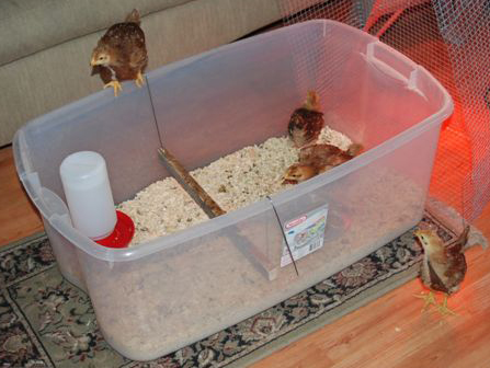 House those hens for under 10 how to build a chicken for How to build a chicken pen cheap