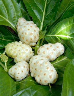 Noni fruit ripe