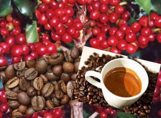 Tinan-tinan, CCT Fo Kafe Oan-Aikakeu 600 Mil Ba Agrikultores