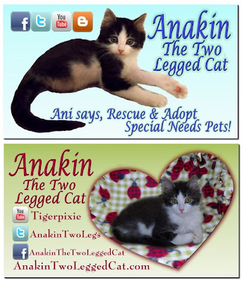 Anakin The Two legged Cat Business Card